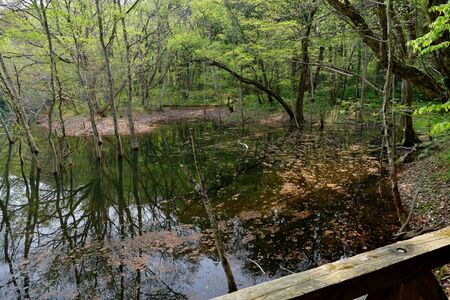 Juni Lake of Fresh Green, Fukaura Town, Aomori Prefecture Japan Stok Fotoğraf