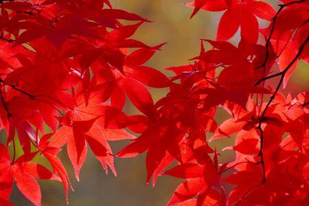 Nakano maple mountain autumn leaves, Kuroishi Aomori Prefecture Japan Reklamní fotografie