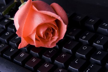 distant: Pink rose lying on computer keyboard represent long distant love. Stock Photo