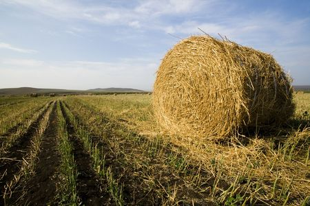 The hay bale in Inner Mongolia grassland in autumn season. Stock Photo - 1936263