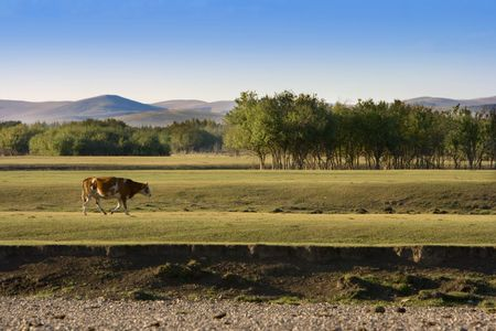 An autumn grassland view at Inner Mongolia with a cow crossing by. Stock Photo - 2241267