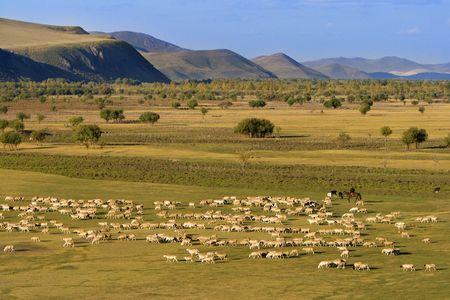 A group of sheep passing through a grassland. Stock Photo