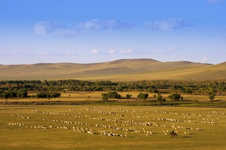 A group of sheep passing through a grassland. Stock Photo - 2241268
