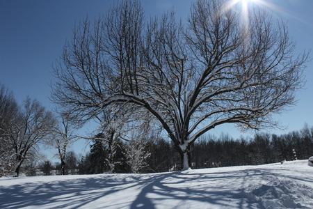 Tree with sun rays Imagens