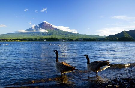 Goose at Fuji photo