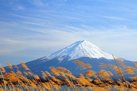 Fuji mt. with golden grass