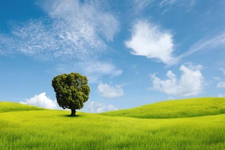 들판에 혼자 나무 스톡 콘텐츠