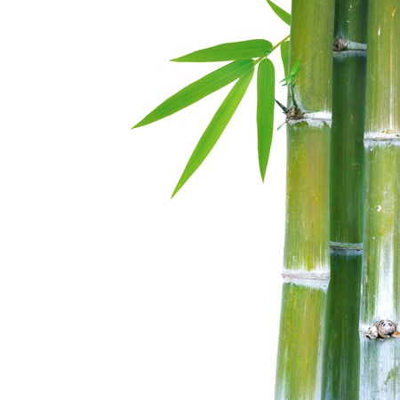 shoots: Bamboo on white Stock Photo