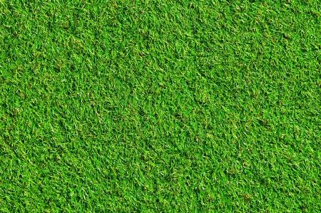 素敵な緑の芝生 写真素材