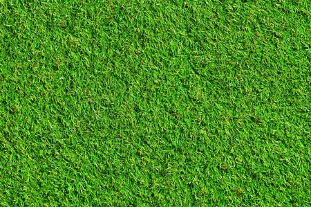 Nice green grass Stock Photo - 10266077