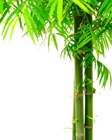fengshui: Bamboo on white Stock Photo