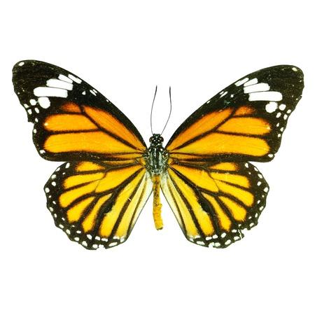 흰색에 나비