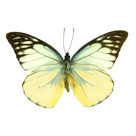 Vlinder op witte Stockfoto