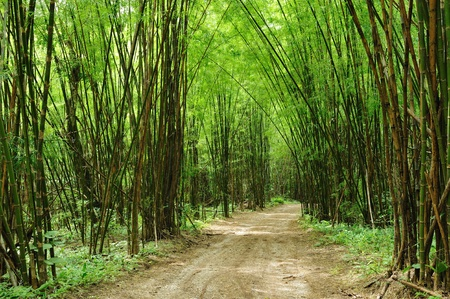 Road to bamboo forest photo