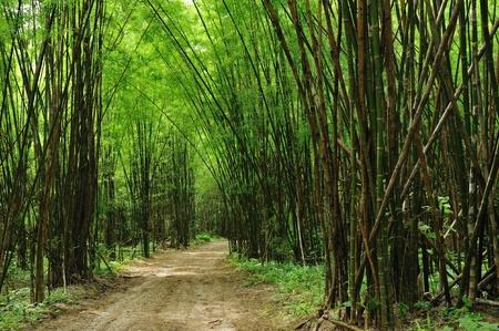 대나무 숲에 도로