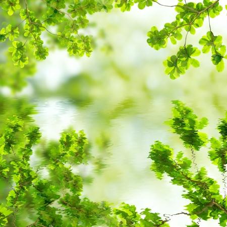 녹색 잎의 반사