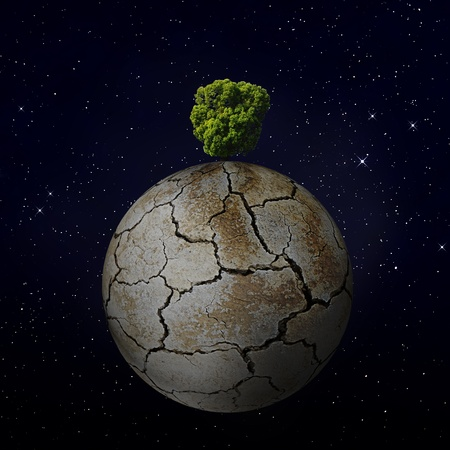 The last tree in the world photo