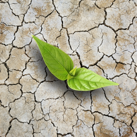 New young tree growth on cracking earth photo