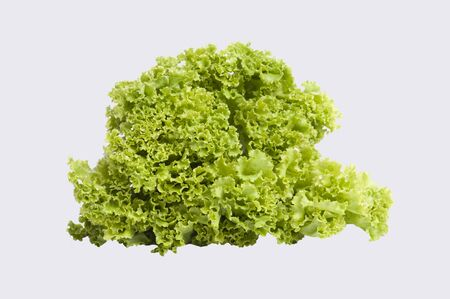 vibrat color: Lettuce salad isolate on white