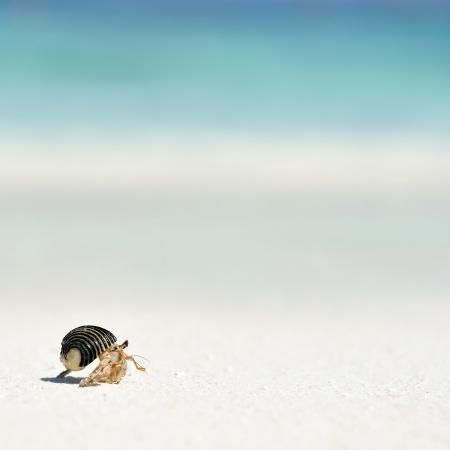 안다만 해 (Andaman Sea)에있는 해변에서 소라게 스톡 콘텐츠