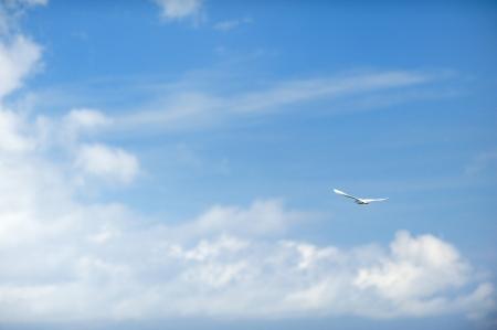 soaring: Freedom bird concept