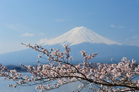 Reflection of Mt Fuji and Cherry Blossom on lake Kawaguchiko