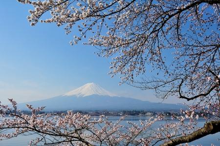 mt fuji: Reflection of Mt Fuji and Cherry Blossom on lake Kawaguchiko