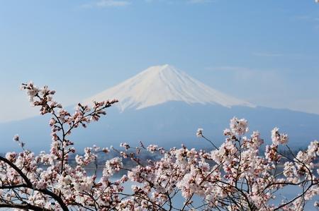 Reflection of Mt Fuji and Cherry Blossom on lake Kawaguchiko photo