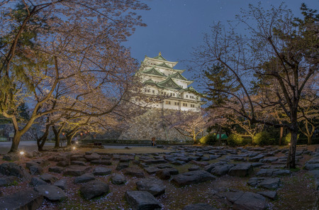 ninja ancient: Nagoya castle with the cherry blossoms in spring