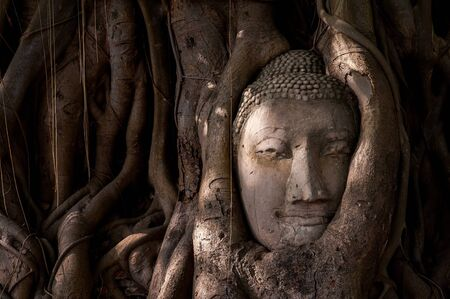 preferable: Buddhas head in tree roots in Ayutthaya as a world heritage site, Thailand
