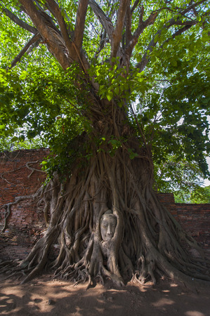 preferable: Buddhas head in tree roots in Ayutthaya  Thailand