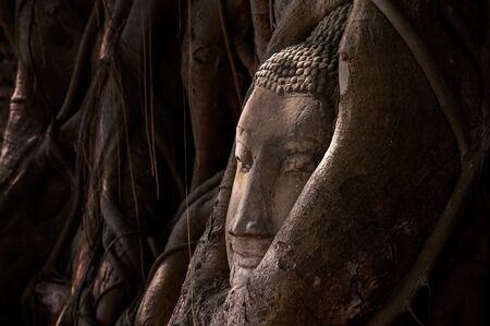 sacked: Buddhas head in tree roots in Ayutthaya  Thailand