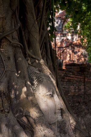 sacked: Buddhas head in tree roots in Ayutthaya as a world heritage site, Thailand