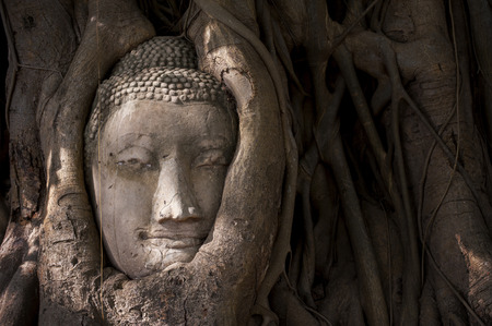 preferable: Buddhas head in tree roots in Ayutthaya as a world heritage site Thailand