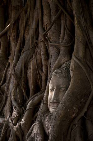 sacked: Buddhas head in tree roots in Ayutthaya as a world heritage site Thailand
