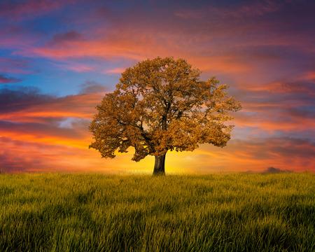 Árbol solo en el campo con las nubes Foto de archivo