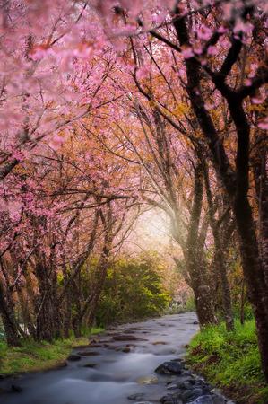 Pink sakura on the waterfall