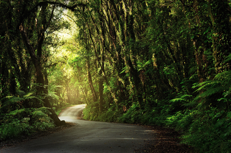 Dirt road going through thick, lush jungle, New zealand