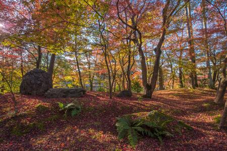 koyo: Autumn foliage at Eikando Temple in Kyoto, Japan