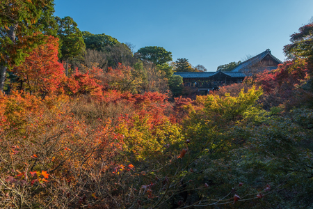 gather: KYOTO - 27 Nov 2015: Crowds gather at Tofukuji Temple to celebrate the autumn maple leave festival in Kyoto, Japan. Editorial