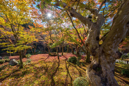 koyo: Autumn foliage at Enkoji Temple in Kyoto, Japan