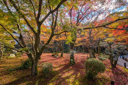 koyo: Autumn foliage at Enkoji Temple in Kyoto, Japan