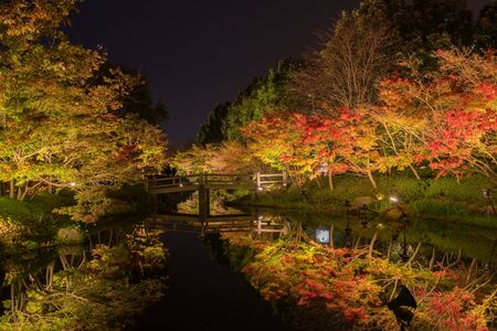 lightup: Lightup on maple tree, Japan