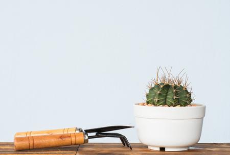 Adorable indoor cactus garden