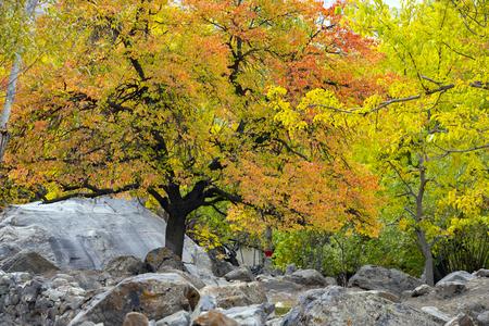 Autumn at upper lake Valley. Northern Area Pakistan Archivio Fotografico