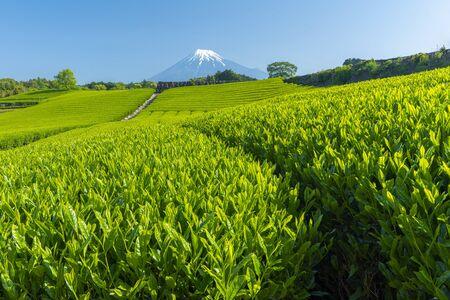 Mountain view and tea plantation landscape at japan