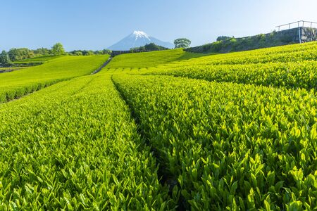 Mountain and tea plantation landscape at japan Banco de Imagens