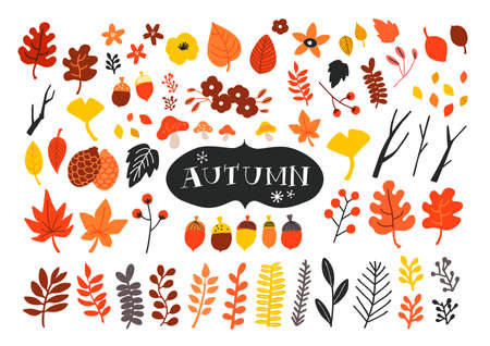 Vector set of autumn icons. Falling leaves, acorns, pinecones and old twigs. Flat cartoon colorful vector illustration.