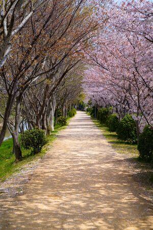 Cherry florals road Zdjęcie Seryjne