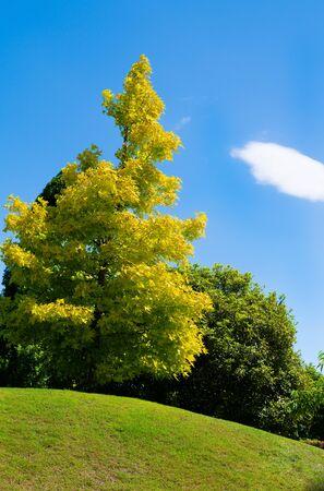 Ciel bleu et arbre au-dessus de la colline
